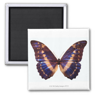 Butterfly with wings spread 3 2 inch square magnet