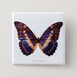 Butterfly with wings spread 3 button