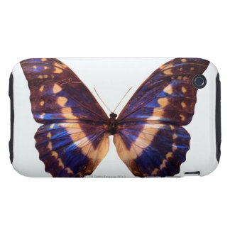 Butterfly with wings spread 3 tough iPhone 3 cover