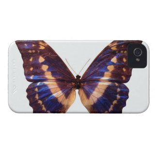 Butterfly with wings spread 3 iPhone 4 cover