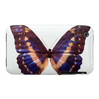 Butterfly with wings spread 3 iPhone 3 case