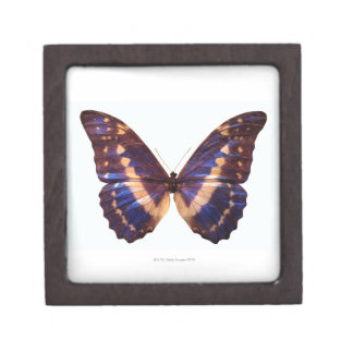 Butterfly with wings spread 3 premium gift boxes
