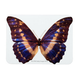 Butterfly with wings spread 3 rectangular photo magnet