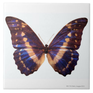 Butterfly with wings spread 3 tile