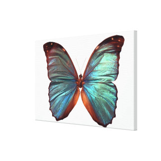 Butterfly with wings spread canvas print
