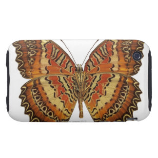 Butterfly with wings spread iPhone 3 tough covers