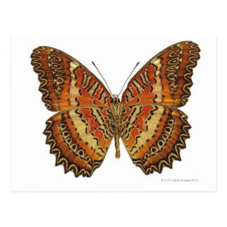 Butterfly with wings spread postcard