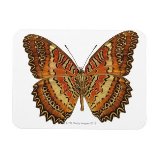 Butterfly with wings spread rectangular photo magnet