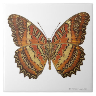 Butterfly with wings spread tile
