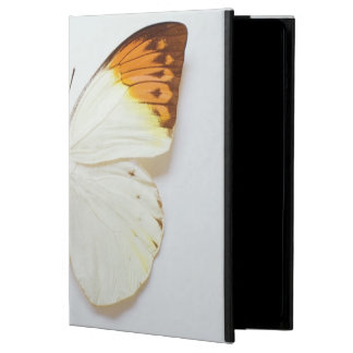 Butterfly with wingspread, found in regions of Asi iPad Air Cases