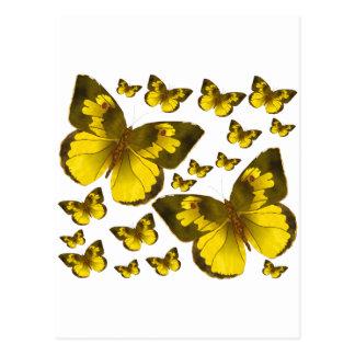 Butterfly Wonder Postcard