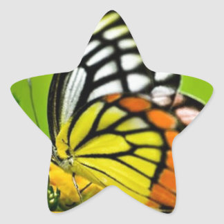 Butterfly yellow.jpg star sticker