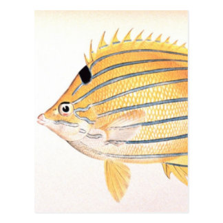 Butterflyfish Azul-Rayados Tarjetas Postales