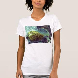 butterflyfish shirts