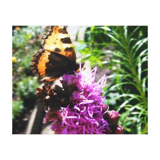 Butterfly's Dream Stretched Canvas Print