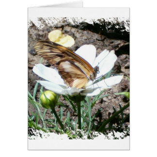 Butterly on flower card