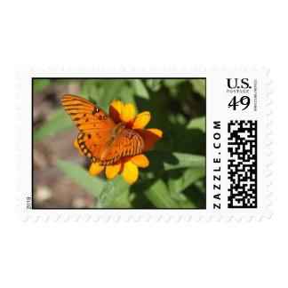 Butterly on zinnia postage