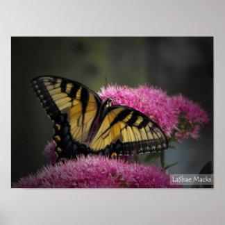 Butteryfly Photo Print