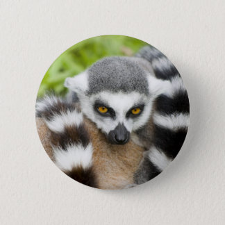 Button Badge - Cute Lemur Stripey Tail