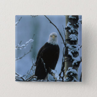 Button / Bald Eagle in Snow