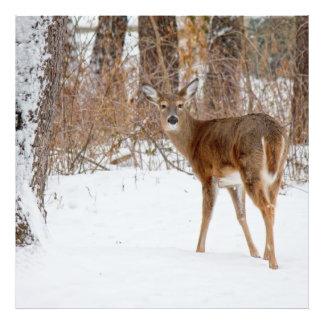 Button Buck Deer in Winter White Snowy Field Photo Print