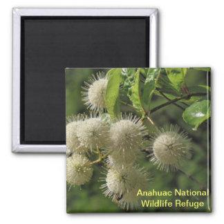 Button Bush Magnet