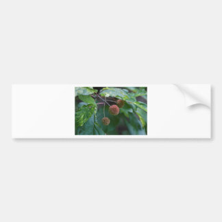 Button Bush Wildflower Buds Bumper Sticker