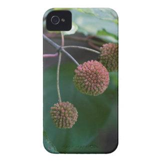 Button Bush Wildflower Buds iPhone 4 Case
