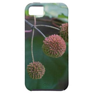 Button Bush Wildflower Buds iPhone SE/5/5s Case