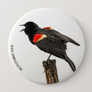 Button Downed Red-Winged Blackbird