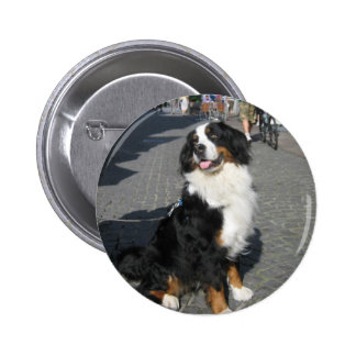 Button: Happy Berner on a Fussen Street 2 Inch Round Button