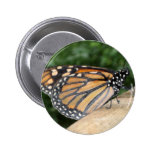 Button or Badge - Monarch Butterfly