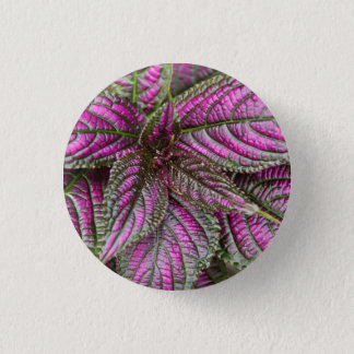 Button - Persian Shield