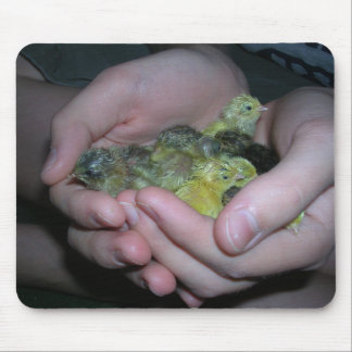 button quail mousepad