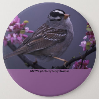 Button / White-crowned Sparrow