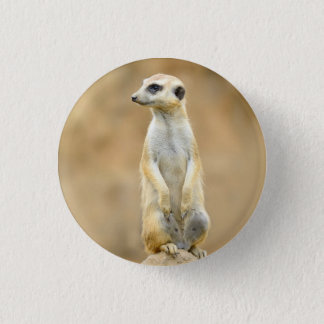 Button with Meerkat on guard