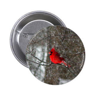 button with photo of male cardinal