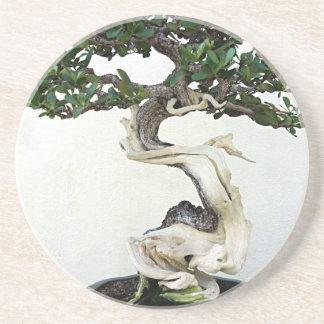 Buttonwood Bonsai Tree Beverage Coasters
