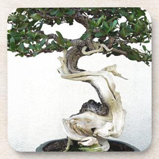 Buttonwood Bonsai Tree Coaster