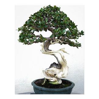Buttonwood Bonsai Tree Letterhead Template