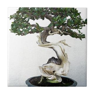 Buttonwood Bonsai Tree Tile