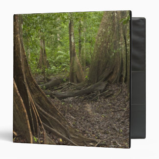 Buttress Roots. Rainforest, Mapari Rupununi, 2 3 Ring Binders