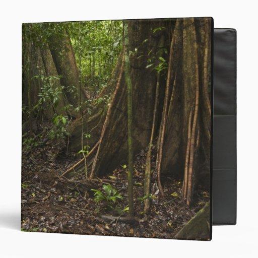 Buttress Roots. Rainforest, Mapari Rupununi, 3 Ring Binder