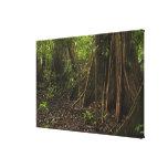 Buttress Roots. Rainforest, Mapari Rupununi, Canvas Print