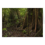 Buttress Roots. Rainforest, Mapari Rupununi, Card