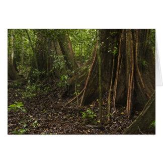 Buttress Roots. Rainforest, Mapari Rupununi, Cards