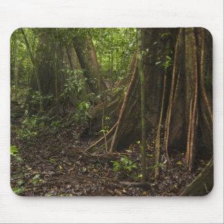 Buttress Roots. Rainforest, Mapari Rupununi, Mousepads