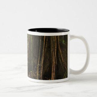 Buttress Roots. Rainforest, Mapari Rupununi, Coffee Mug