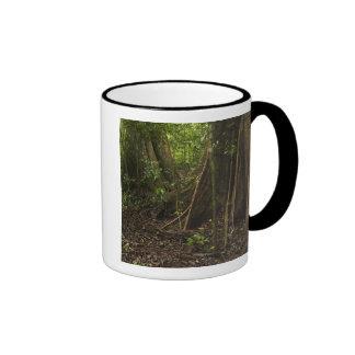 Buttress Roots. Rainforest, Mapari Rupununi, Mugs