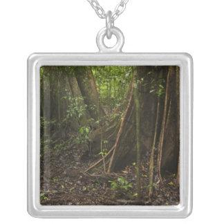 Buttress Roots. Rainforest, Mapari Rupununi, Custom Necklace